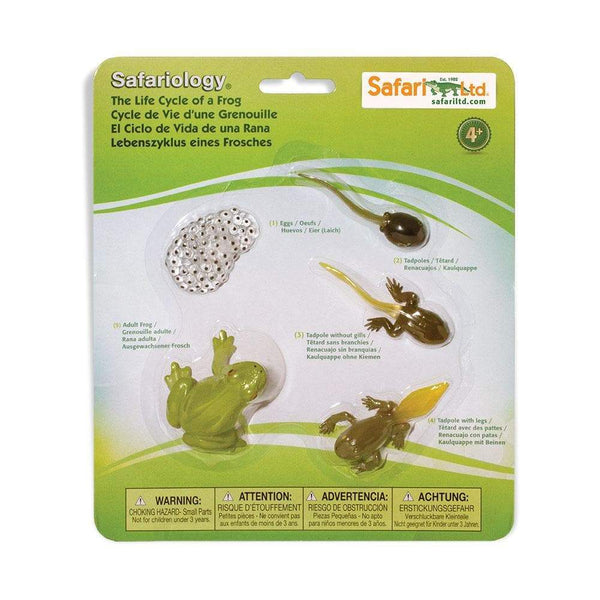 Life Cycle Of A Frog Science Toy Safari Ltd