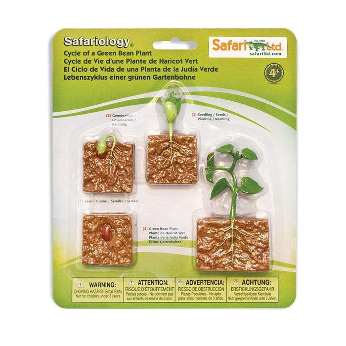 Life Cycle of a Green Bean Plant | Montessori Toys | Safari Ltd.