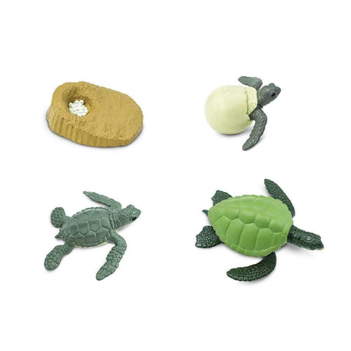 Life Cycle of a Green Sea Turtle - Safari Ltd®