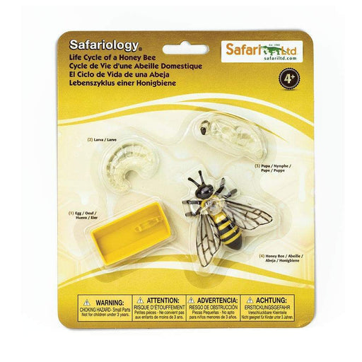 Life Cycle of a Honey Bee - Safari Ltd®