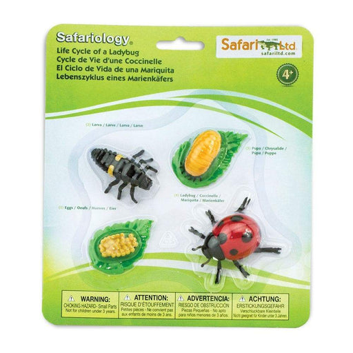 Life Cycle of a Ladybug - Safari Ltd®