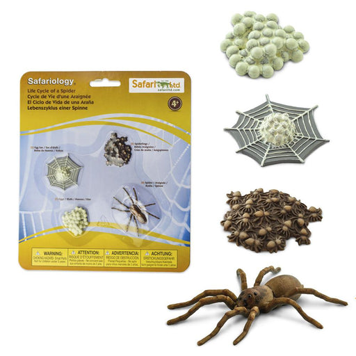 Life Cycle of a Spider - Safari Ltd®