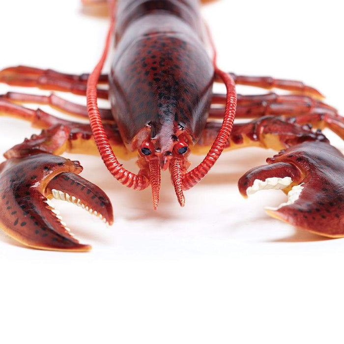 Maine Lobster - Safari Ltd®
