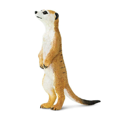 Meerkat - Safari Ltd®