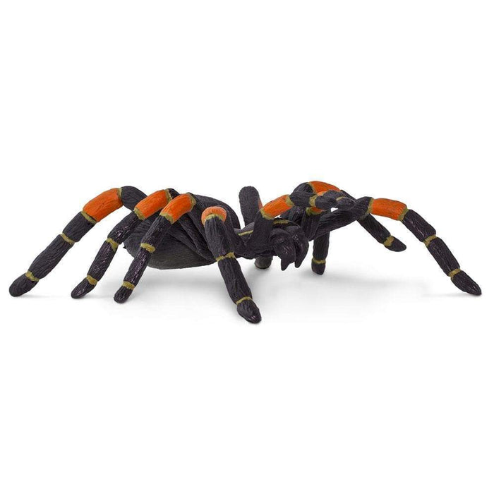 Orange-kneed Tarantula - Safari Ltd®