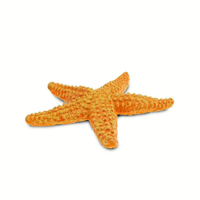 Orange Starfish - Safari Ltd®
