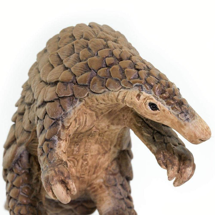 Pangolin - Safari Ltd®