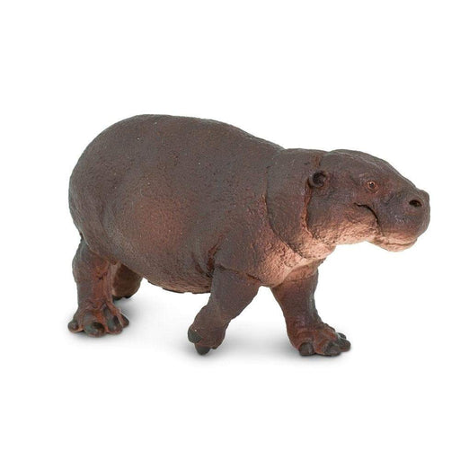 Pygmy Hippo - Safari Ltd®