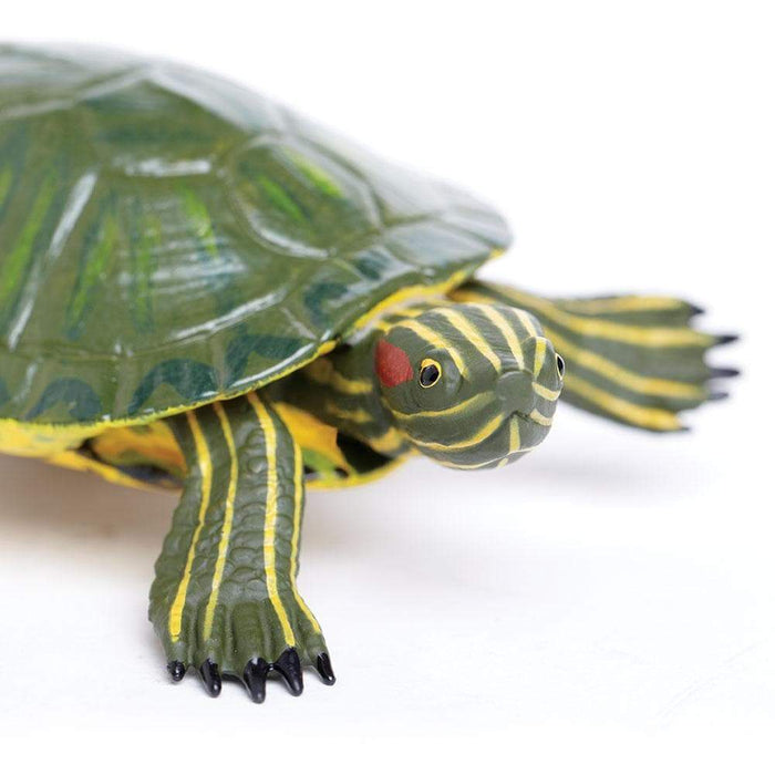 Red-Eared Slider Turtle - Safari Ltd®