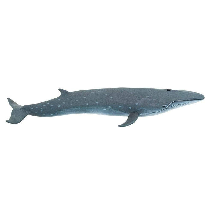 Sei Whale - Safari Ltd®