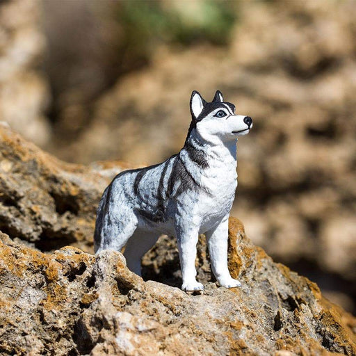 Siberian Husky - Safari Ltd®