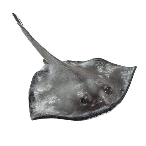 Sting Ray - Safari Ltd®