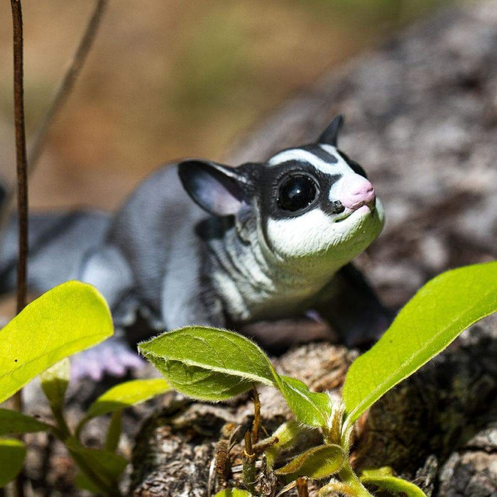 Sugar Glider - Safari Ltd®