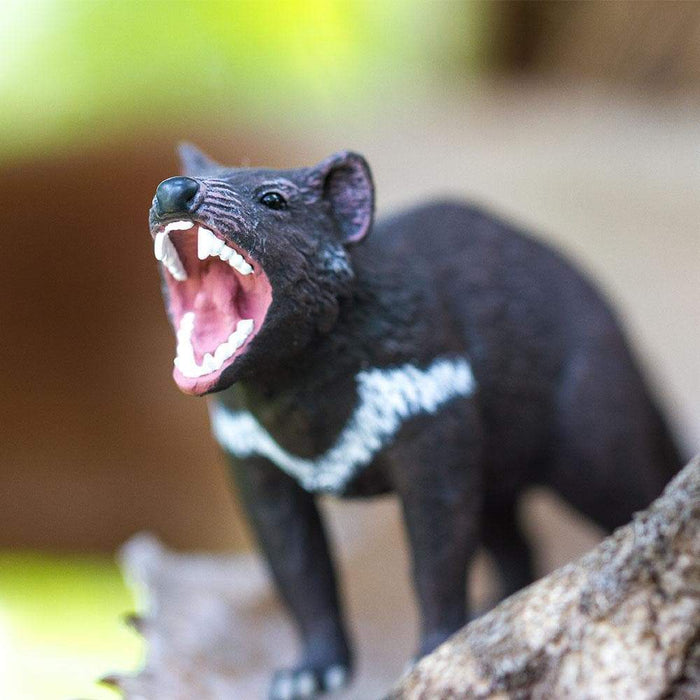 Tasmanian Devil - Safari Ltd®
