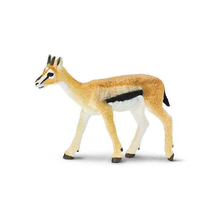 Thomson's Gazelle - Safari Ltd®
