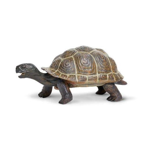Tortoise Baby - Safari Ltd®