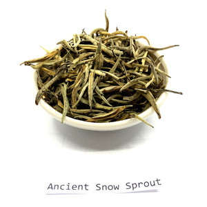 Ancient Snow Sprout