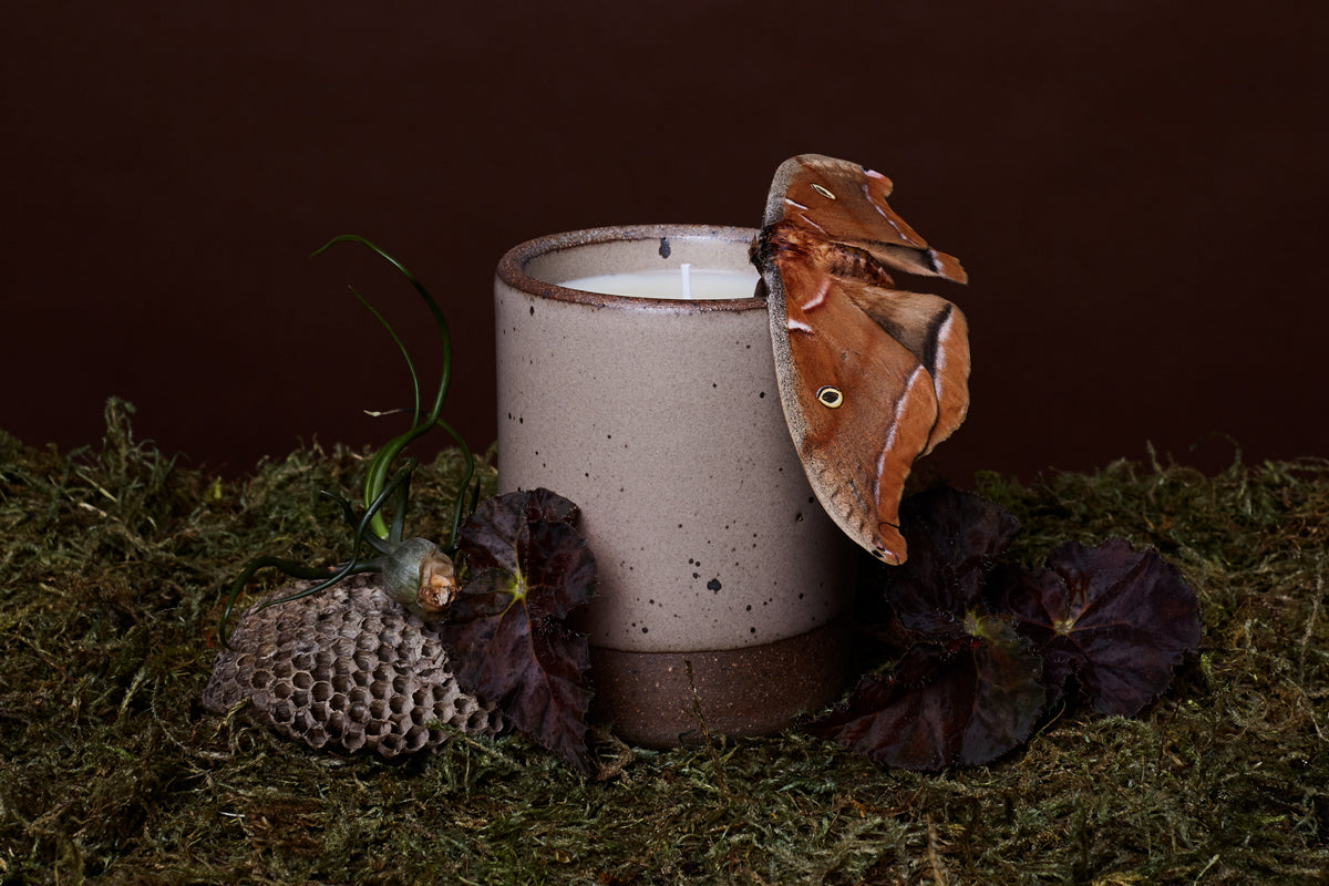 A dramatic scene of the East Fork Odd Woods candle with a dried bee hike and a moth sitting atop bed of moss.