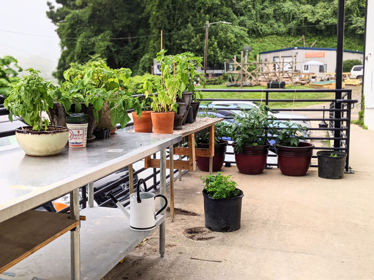 Donnie's terrace garden at East Fork