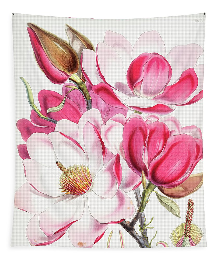 Himalayan Magnolia Campbellii  - Tapestry