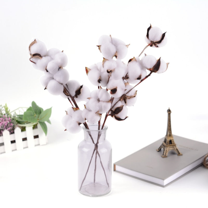 Naturally Dried Cotton Stems for Home Decor