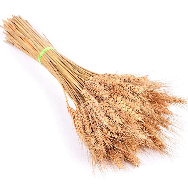 Natural Dried Small Pampas/ bunny tail Grass