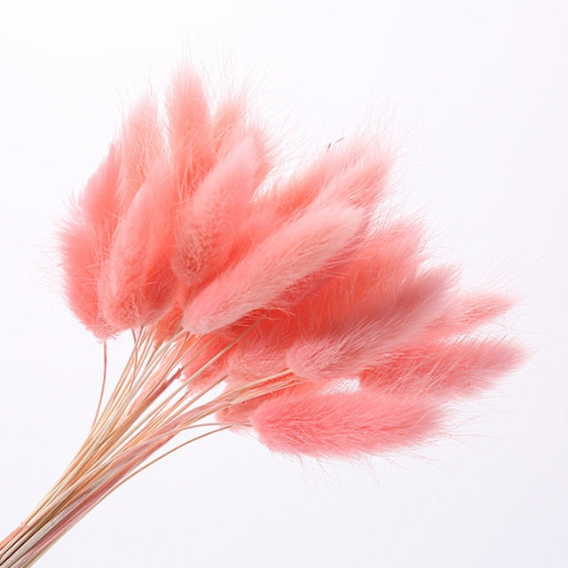 30Pcs/lot Natural Dried Flowers Rabbit Tail Grass