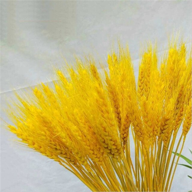 50pcs Real Wheat Ear Natural Dried Flowers 45cm