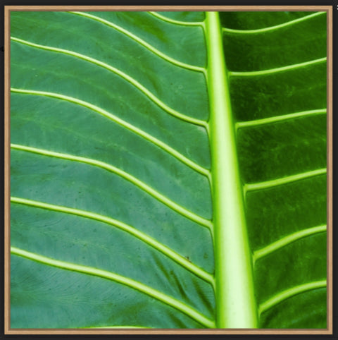 Tropical Leaf Framed Photograph