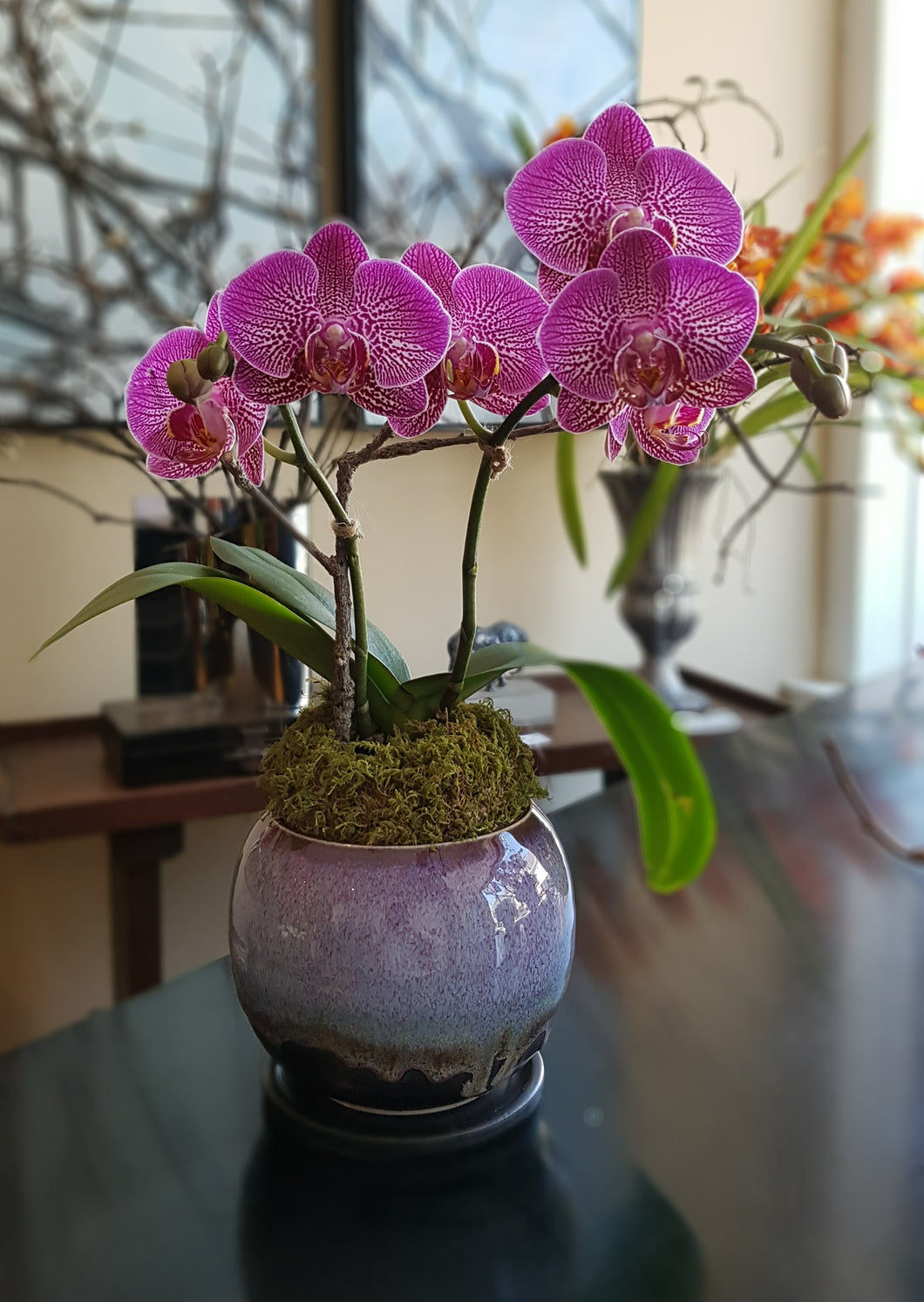 Hummingbird Pink Phalaenopsis arranged in Japanese Satin Glazed Porcelain Vessel, Thrown by Hand