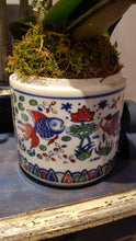 Dragon Red Miniature Phalaenopsis in Hand Painted Chinese Porcelain Ginger Jar
