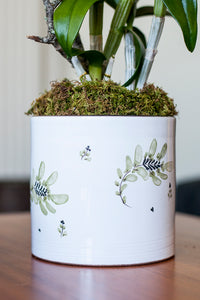 White Alabaster – Dendrobium arranged in Hand Painted Tuscan style