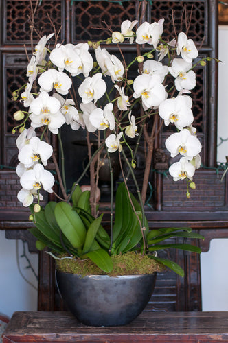 Cascading White Phalaenopsis arranged in Gunmetal Boat Shape Porcelain Vessel
