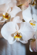 White Alabaster Phalaenopsis Bouquet 6 stems arranged in White waterfalls Porcelain vase