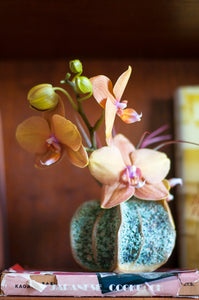 Single Stem Phalaenopsis Only with crimson red Tillandsia Air Plant  (Vase Not Included)
