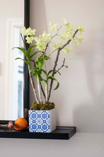 Celadon Green Dendrobium arranged in a single-sided Blue & White pot