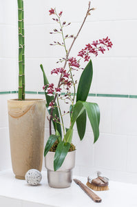 Chocolate Oncidium - Sharry Baby arranged in Modern Japanese Style Porcelain Cachepot, Shimmering Silver