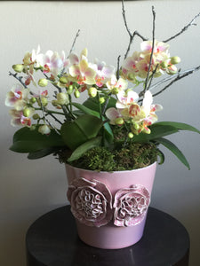 Miniature Blush Phalaenopsis arranged in Handcrafted Pink Florets Porcelain Cachepot