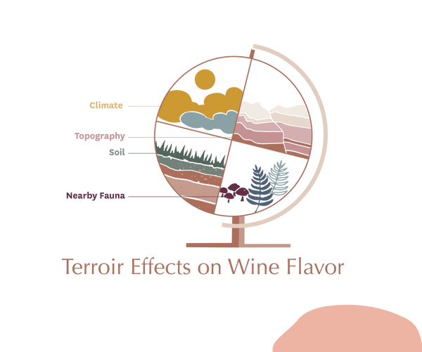 Terroir on Wine Flavor | 10 Things to Know About Wine