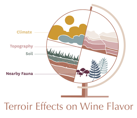 Terroir Effects on Wine Flavor - Climate, Topography, Flora, Fauna