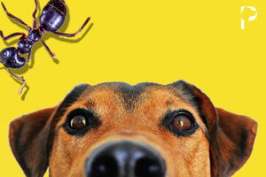 Say it ANT so! - A Dog Friendly Guide To Ridding Your House of ANTs