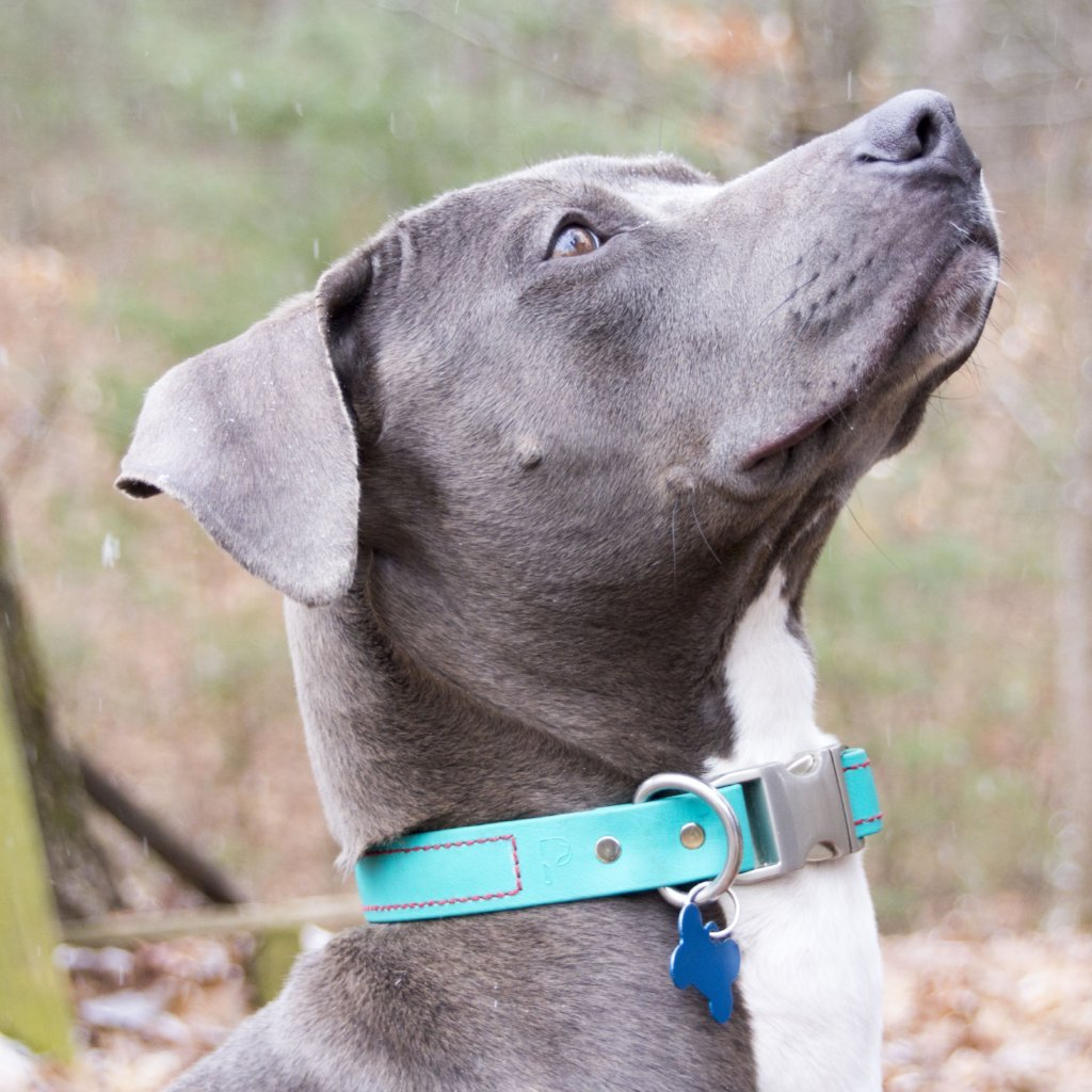 Quick Release Dog Collar