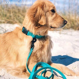 ENDEAVOR All-Terrain Leash