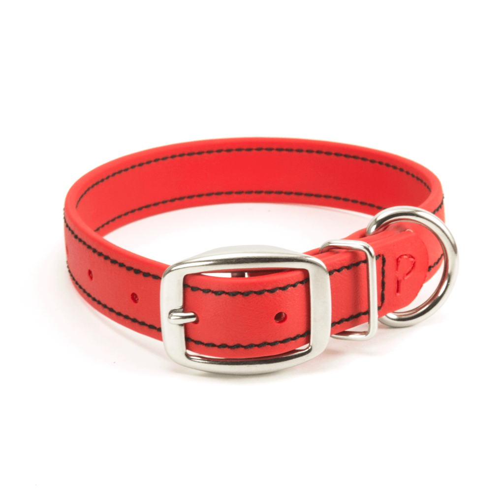 Classic Buckle Collar