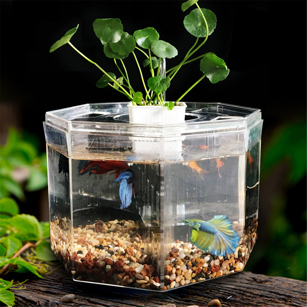 Mini Clear Acrylic Betta Aquarium Fish Tank Desktop