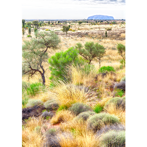 Northern Territory, Ayers Rock - AUS081