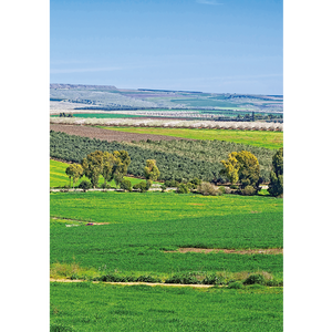Jezreel Valley - ISR084