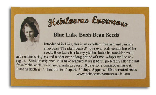 Heirlooms Evermore Blue Lake Bush Bean Seeds - 150 seeds