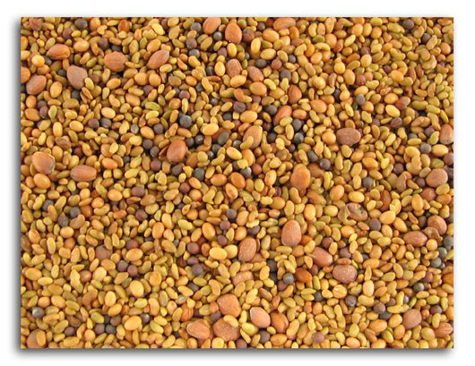 Bulk Sprouting Seed Mix - 5 lbs.