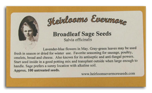 Heirlooms Evermore Broadleaf Sage Seeds - 100 seeds